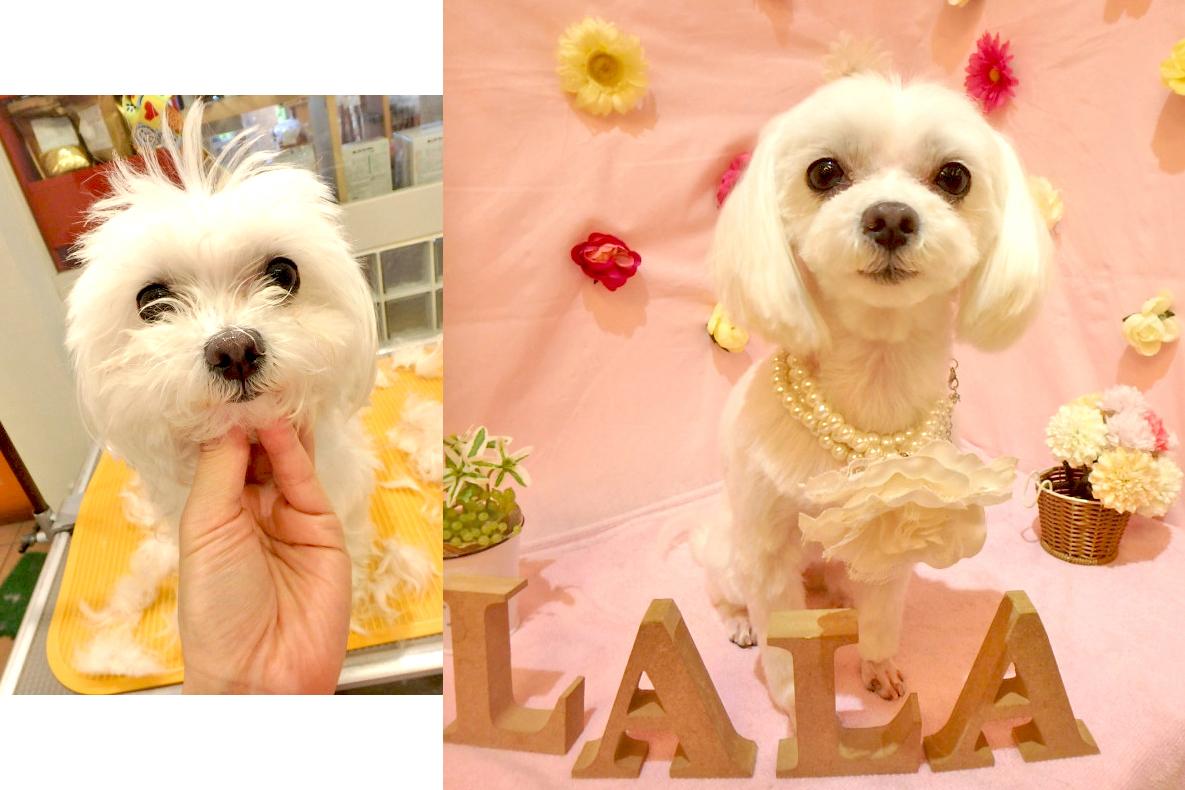 La La Dogs 三鷹