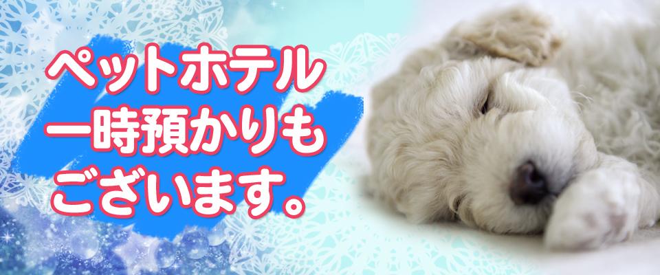 犬の美容室 Cut in Dog【カットインドッグ】