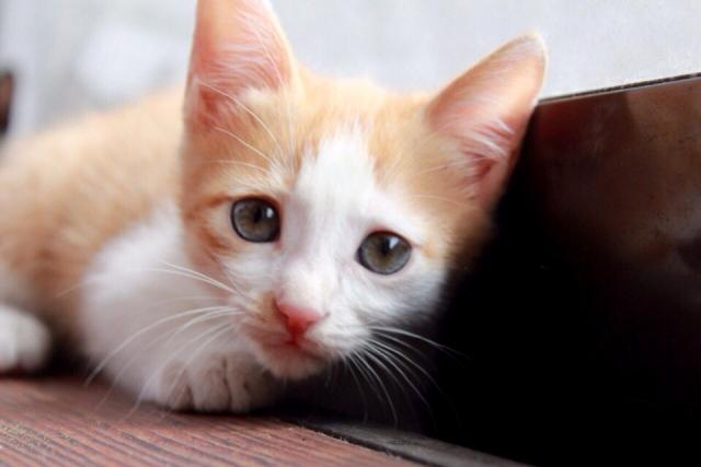 湘南子猫物語