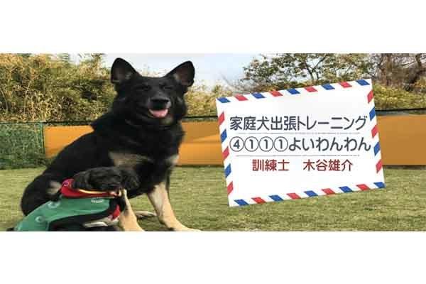 家庭犬 出張トレーニング よいわん!わん!