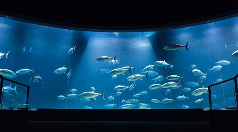 GWこどもの日 子供入場無料④:『葛西臨海水族園』(東京都江戸川区)