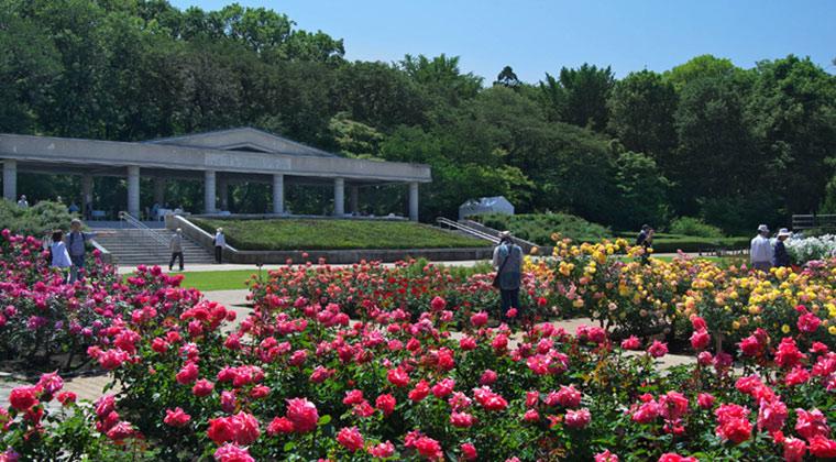 GWこどもの日 子供入場無料⑤:『神代植物公園』(東京都調布市)